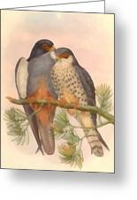Pair Amur Falcons Greeting Card