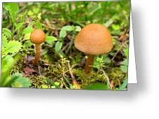 Pair O Mushrooms Greeting Card