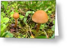 Pair O Mushrooms Greeting Card