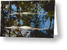 Pair Of American Alligators Greeting Card