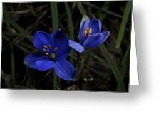 Pair Of Blue Stars Greeting Card