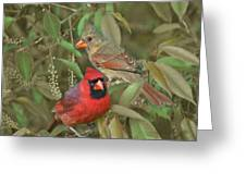 Pair Of Cardinals Greeting Card