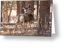 Pair Of Does Greeting Card