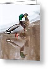 Pair Of Ducks Greeting Card