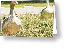 Pair Of Geese Greeting Card by Artist and Photographer Laura Wrede