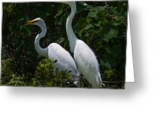 Pair Of Herons Greeting Card