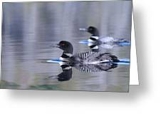 Pair Of Loons Greeting Card