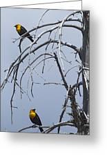 Pair Of Male Yellow-headed Blackbird   #9521 Greeting Card