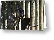 Pair Of Owls Greeting Card