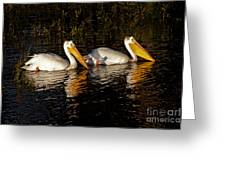Pair Of Pelicans   #6935 Greeting Card
