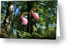 Pair Of Pink Lady Slippers  Greeting Card