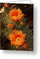 Pair Of Prickly Pear Cactus Blooms In The Sandia Foothills Greeting Card