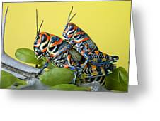 Pair Of Rainbow Grasshoppers On Ocotillo Greeting Card