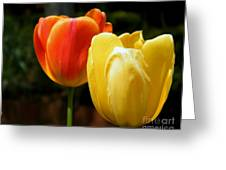 Pair Of Red And Yellow Tulips Greeting Card