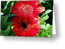 Pair Of Red Gerber Daisy Flowers With Ladybug Greeting Card
