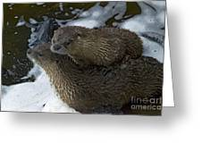 Pair Of River Otters   #1266 Greeting Card