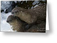 Pair Of River Otters   #1301 Greeting Card