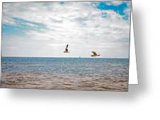 Pair Of Seagulls Greeting Card