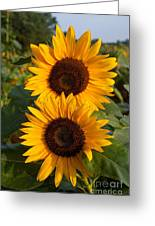 Pair Of Sunflowers Greeting Card