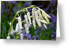 Pair Of White Bluebells Greeting Card