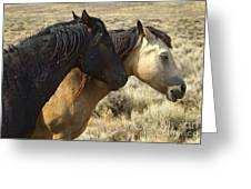 Pair Of Wild Mares   #0469 Greeting Card