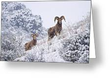 Pair Of Winter Rams Greeting Card