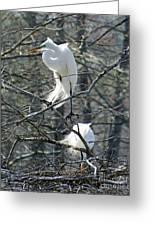 Paired Egrets At Lake Martin Louisiana Greeting Card