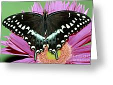 Palamedes Swallowtail Papilio Palamedes Greeting Card