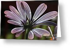 Pale Blue Flower Backlit Greeting Card