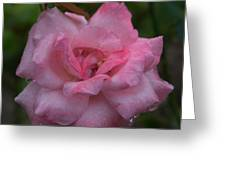 Pale Pink Beauty Greeting Card