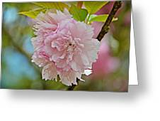 Pale Pink Blossoms Greeting Card