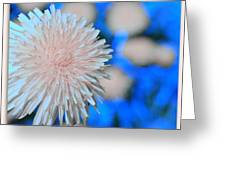 Pale Pink Bright Blue Greeting Card