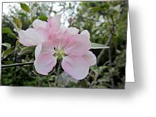 Pale Pink Crabapple Blossom Greeting Card