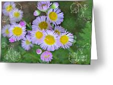 Pale Pink Fleabane Blooms With Decorations Greeting Card