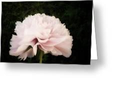 Pale Pink Peony Greeting Card