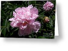 Pale Pink Peony Watercolor Effect Greeting Card