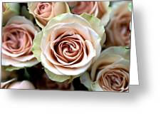 Pale Pink Roses Greeting Card by Kathy Yates