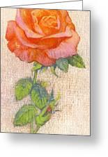 Pale Rose Greeting Card by George Adamson
