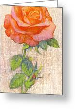 Pale Rose Greeting Card