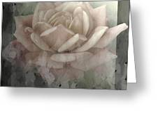 Pale Rose Photoart Greeting Card by Debbie Portwood