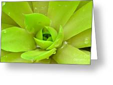 Pale Succulent Greeting Card