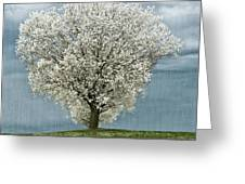 Pale White Tree On Cloudy Spring Day E83 Greeting Card