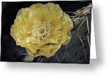 Pale Yellow Prickly Pear Bloom  Greeting Card