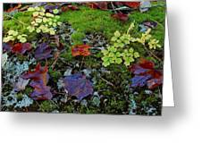 Palette Of Colour Greeting Card