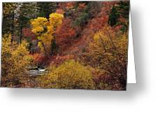 Palisades Creek Canyon Greeting Card