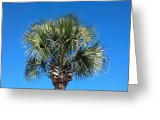 Palm Against Blue Sky Greeting Card