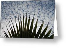 Palm And Clouds Greeting Card