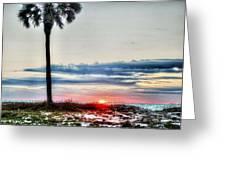 Palm And Sun Greeting Card