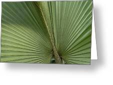 Palm, Belize Botanic Garden Greeting Card