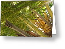Palm Blossoms Greeting Card
